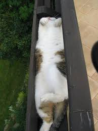 Sleeping Cat Meme - 30 cats who have mastered the art of sleep fu bored panda