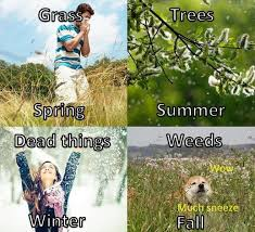 seasonal allergy memes qurkus