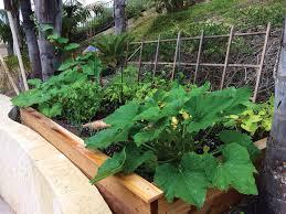 teca u0027s edible gardens san diego living magazine