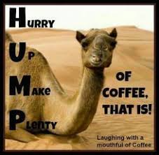 Wednesday Hump Day Meme - blah blah blah hump day can i have coffee good morning wednesday