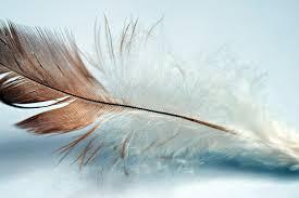 Bird Wing - free photo feather single bird wing nature free image on