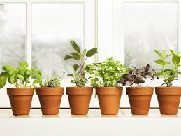 herb anti inflammatory herbs turmeric ginger u0026 boswellin dr