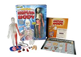 Human Body Muscles Images Human Body Activities U0026 Experiments For Kids This Reading Mama
