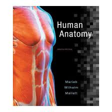 What Is Human Anatomy And Physiology 1 Human Anatomy 8th Ed A Photographic Atlas For Anatomy