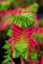 Our Favorite Plants How To by 170 Best Unusual House Plants Images On Pinterest Gardening