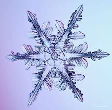 photography snowflakes and snow crystals by mark cassino art