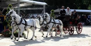 bianchi carrozze carrozze cavalli 盪 sul celebre anello di piazza di siena 2016