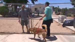 5 people injured multiple dogs killed by brush fire that spread