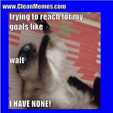 Clean Cat Memes - image result for cat memes clean cat memes pinterest cat
