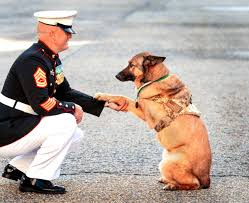camp pendleton war dog loses leg in bomb blast gets highest