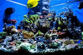 Aquascape Designs Inc Http Www Decosee Com Picture Aquascape Aquariums Design Jpg