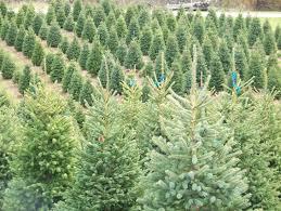 aissen tree farm kewaunee wi trees