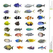 aquarium fish names