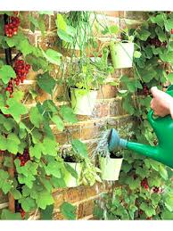 gardening projects how to create an herb garden at womansday com