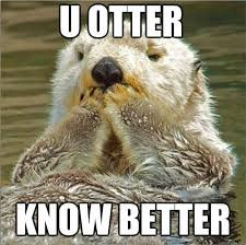 Sea Otter Meme - funny otter meme 28 images not a fan of otter memes i laughed at