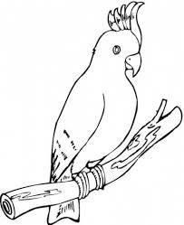 bird coloring page parrot animal coloring pages of