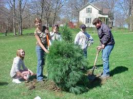 city wide tree give away city of angola indiana
