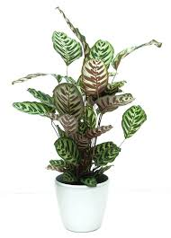 best plants for low light low light house plant incredible plant wonderful hardy indoor plants