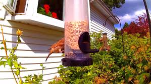 backyard bird feeder point of view with several birds landing on