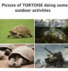 Tortoise Meme - picture of tortoise doing some outdoor activities meme on me me