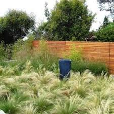 91 best ornamental grasses images on landscaping