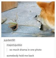 Praying Memes - i can has cheezburger praying mantis funny animals online