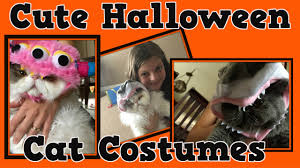 Halloween Costumes George Cute Halloween Costumes Kittens U0026 Cats Willy U0026 George Dress