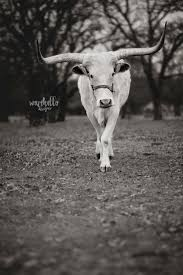 Texas Longhorn Home Decor Fine Art Print Longhorn Home Decor