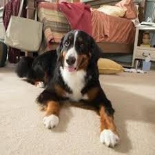 best pet flooring guide wayfair