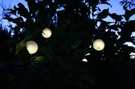 solar powered outdoor string lights from inst front yard