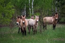 native plants and animals animals rule chernobyl three decades after nuclear disaster