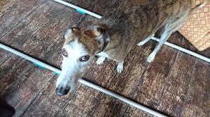 staff claim celebrity big brother star has taken devizes pub s dog
