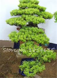 decorative plants for home inspirative indoor garden with green