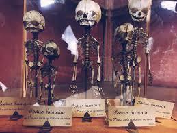 a giant cabinet of curiosities in paris