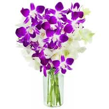 White Dendrobium Orchids Dendrobium Orchids 12 Stems Free Shipping Today Overstock