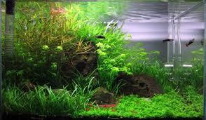 Aquascape Layout Planted U2013 Aquarium Architect Custom Fish Tanks Sydney