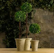 Real Topiary Trees For Sale - topiaries rh