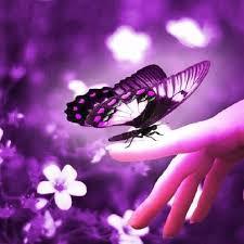 the purple butterfly survivorheal