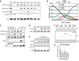 Flag Tag Dna Sequence Direct Screening For Chromatin Status On Dna Barcodes In Yeast