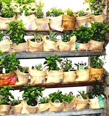 vegetable garden layout ideas layouts using burlap the fascinating