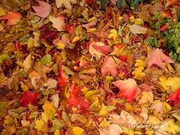 pumpkin iphone background autumn leaf pattern wallpaper