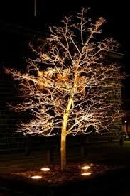 Backyard Lighting Ideas Landscape Lighting Ideas Trees