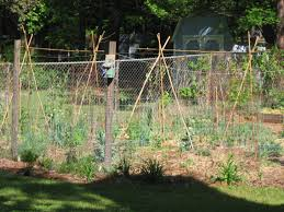 Growing Pumpkins On A Trellis Simple Trellis For Green Beans Organic Forum At Permies