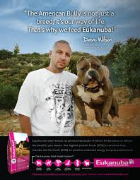 american pitbull terrier gotti razors edge razors edge pit bull bloodline history kinneman kennels american