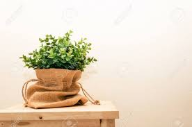 green tree plant in pot or bag sack small decorative on wooden