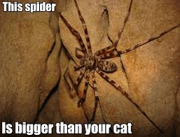 Spider Meme - giant huntsman spider wat know your meme