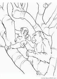 coloriage deux singes à imprimer dans les coloriages singe