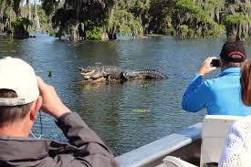 Louisiana wildlife tours images Lafayette louisiana swamp tours eco tourism at it 39 s best jpg