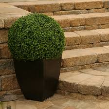 Topiary Frames Online D U0026 W Silks Boxwood Ball Square Boxwood Topiary In Planter
