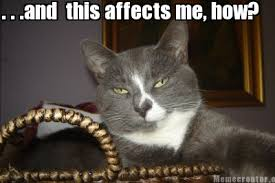Kitty Meme Generator - meme creator indifferent cat meme generator at memecreator org